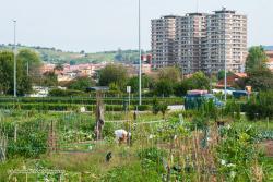 Presentadas 88 solicitudes para los 16 huertos urbanos vacantes en Torrelavega